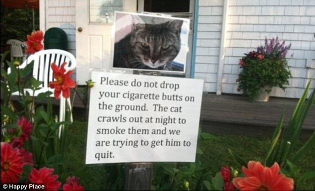 Hilarious approach for humilating neighbours'